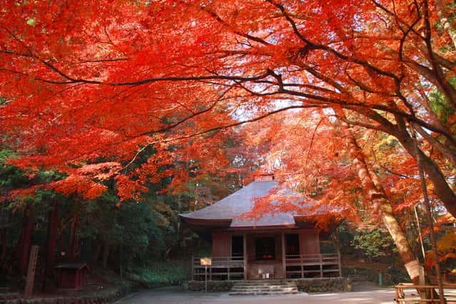 中尊寺の画像 p1_36